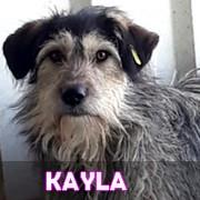 Les adultes de taille moyenne en Roumanie en un clin d'oeil Kayla11