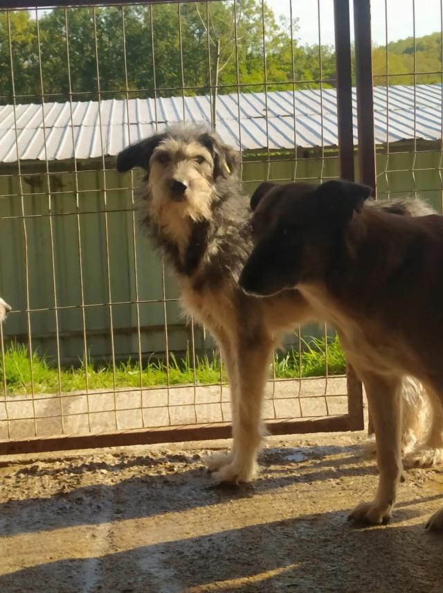 KAYLA - x griffon 5 ans (5 ans de refuge)  Asso Remember Me (Roumanie) Kayla12