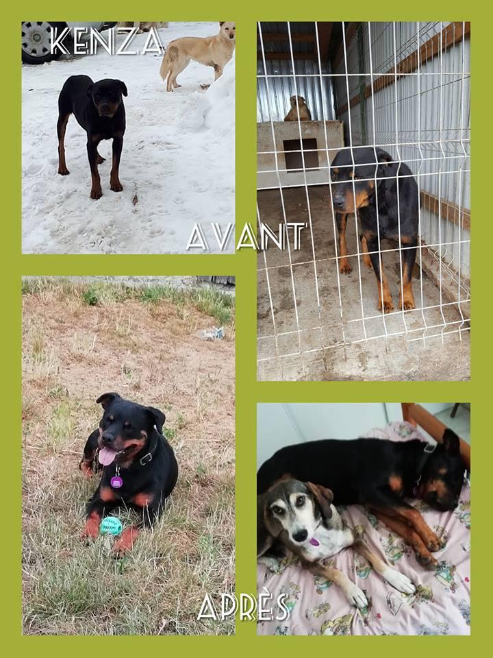 KENZA - femelle Rottweiler de grande taille, née environ en février 2010 (PASCANI) - REMEMBER ME LAND - ADOPTEE PAR LAURENCE (58) - Page 2 Kenza13