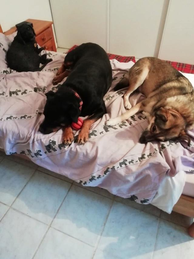 KENZA - femelle Rottweiler de grande taille, née environ en février 2010 (PASCANI) - REMEMBER ME LAND - ADOPTEE PAR LAURENCE (58) - Page 2 Kenza311