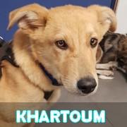 Association Remember Me France : sauver et adopter un chien roumain Kharto38