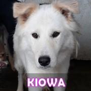 Association Remember Me France : sauver et adopter un chien roumain Kiowa13