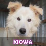 Les adultes de taille moyenne en Roumanie en un clin d'oeil Kiowa15