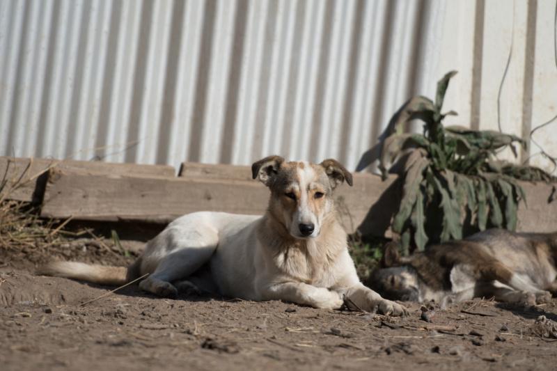 KOOKAÏ - femelle croisée de petite taille  adulte, née octobre 2017. Récupérée en urgence (PASCANI) - REMEMBER ME LAND Kookai17