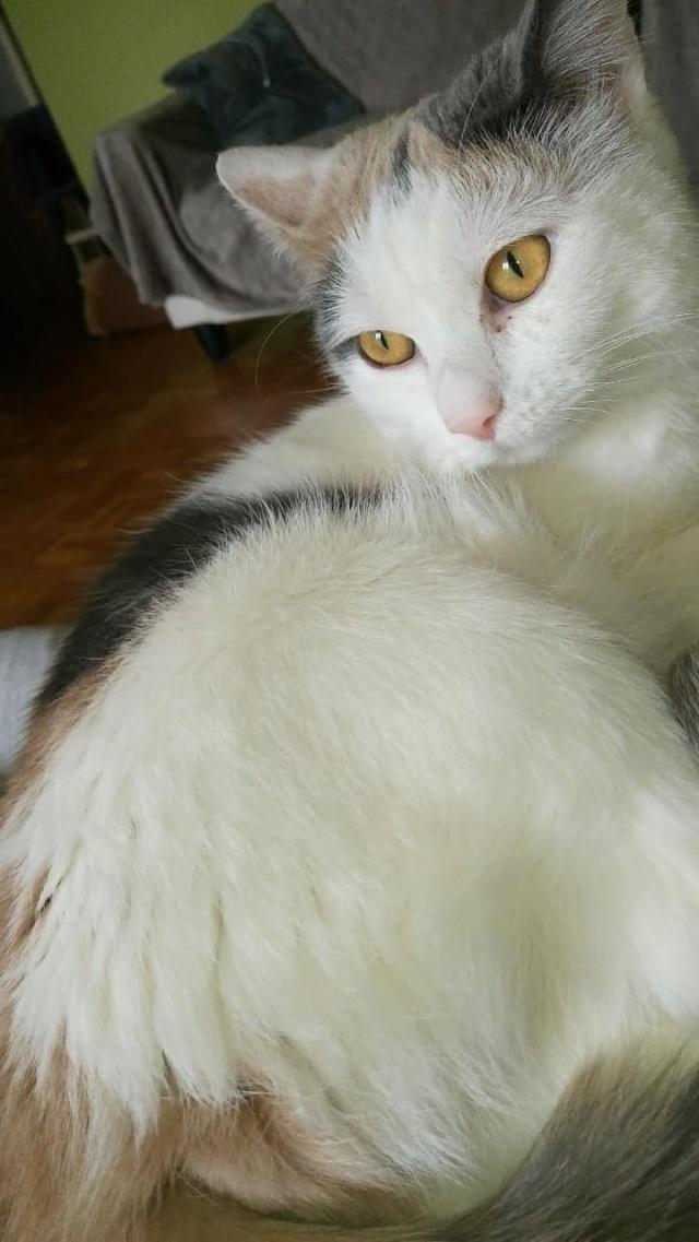 KYTTY - chat femelle, née septembre 2016 - CHEZ LUMINITA - En FA chez Abysse (dpt92) - ADOPTEE PAR SANDRA (depart94) Kytty11