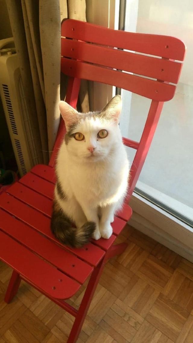 KYTTY - chat femelle, née septembre 2016 - CHEZ LUMINITA - En FA chez Abysse (dpt92) - ADOPTEE PAR SANDRA (depart94) Kytty312