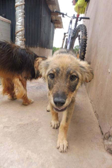 AMEH (LEONA) - femelle croisée chien loup/berger de taille moyenne adulte, née environ mars 2018- adoptée par Émilie et Benjamin (06) Leona_10