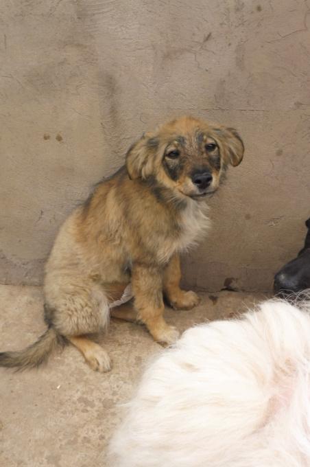 AMEH (LEONA) - femelle croisée chien loup/berger de taille moyenne adulte, née environ mars 2018- adoptée par Émilie et Benjamin (06) Leona_11
