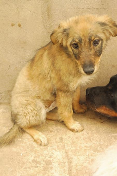 AMEH (LEONA) - femelle croisée chien loup/berger de taille moyenne adulte, née environ mars 2018- adoptée par Émilie et Benjamin (06) Leona_13