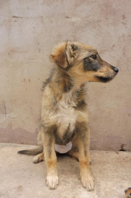 AMEH (LEONA) - femelle croisée chien loup/berger de taille moyenne adulte, née environ mars 2018- adoptée par Émilie et Benjamin (06) Leona_14