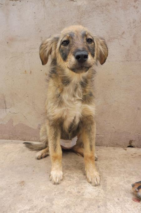 AMEH (LEONA) - femelle croisée chien loup/berger de taille moyenne adulte, née environ mars 2018- adoptée par Émilie et Benjamin (06) Leona_15