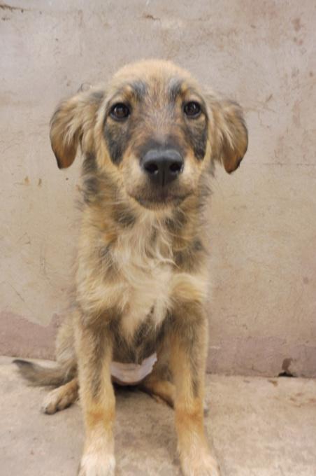 AMEH (LEONA) - femelle croisée chien loup/berger de taille moyenne adulte, née environ mars 2018- adoptée par Émilie et Benjamin (06) Leona_16
