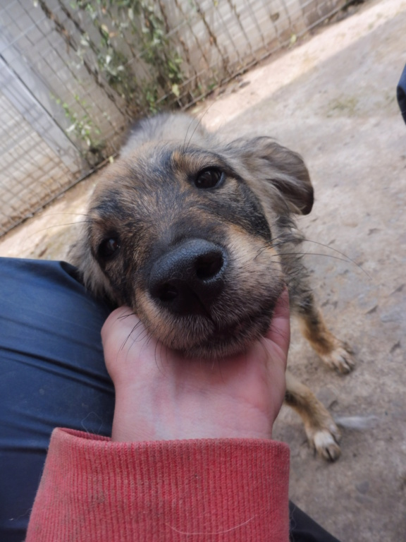 AMEH (LEONA) - femelle croisée chien loup/berger de taille moyenne adulte, née environ mars 2018- adoptée par Émilie et Benjamin (06) Leona_17