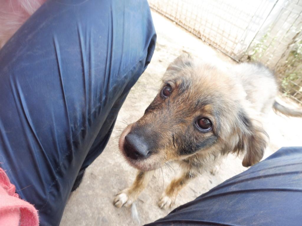 AMEH (LEONA) - femelle croisée chien loup/berger de taille moyenne adulte, née environ mars 2018- adoptée par Émilie et Benjamin (06) Leona_18