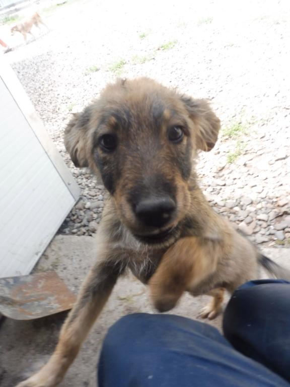 AMEH (LEONA) - femelle croisée chien loup/berger de taille moyenne adulte, née environ mars 2018- adoptée par Émilie et Benjamin (06) Leona_19