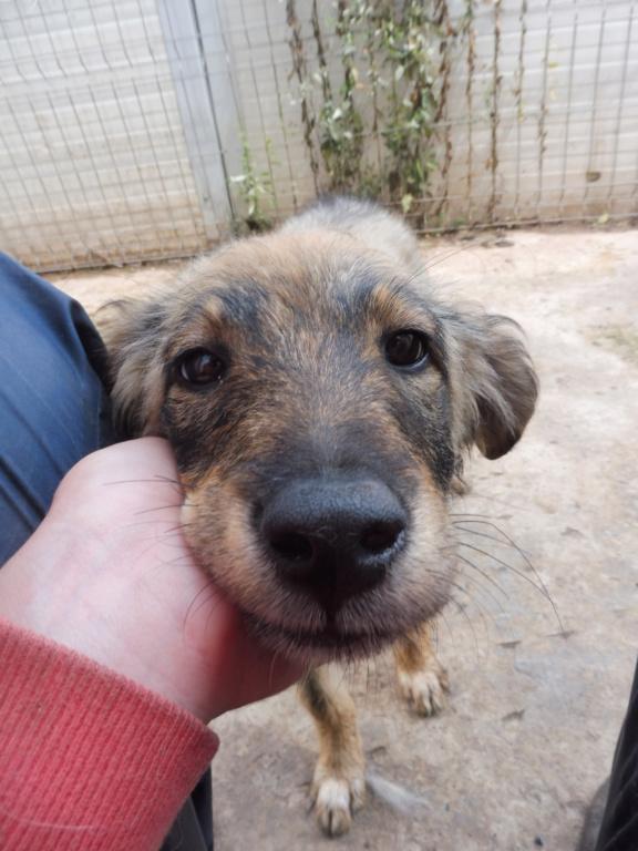 AMEH (LEONA) - femelle croisée chien loup/berger de taille moyenne adulte, née environ mars 2018- adoptée par Émilie et Benjamin (06) Leona_20