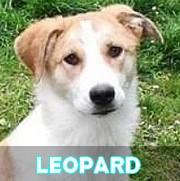 Association Remember Me France : sauver et adopter un chien roumain Leopar18