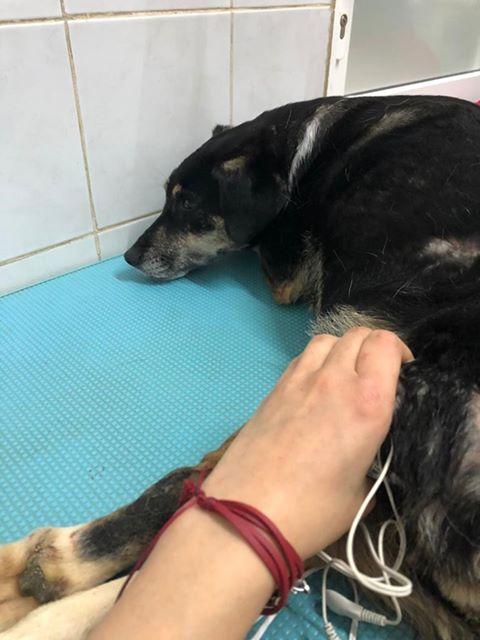 LISETTE - femelle, handicapée, croisée de petite taille à moyenne, née environ en 2017 (PASCANI) - clinique de Mircea (Bucarest)  - Page 6 Lisett63