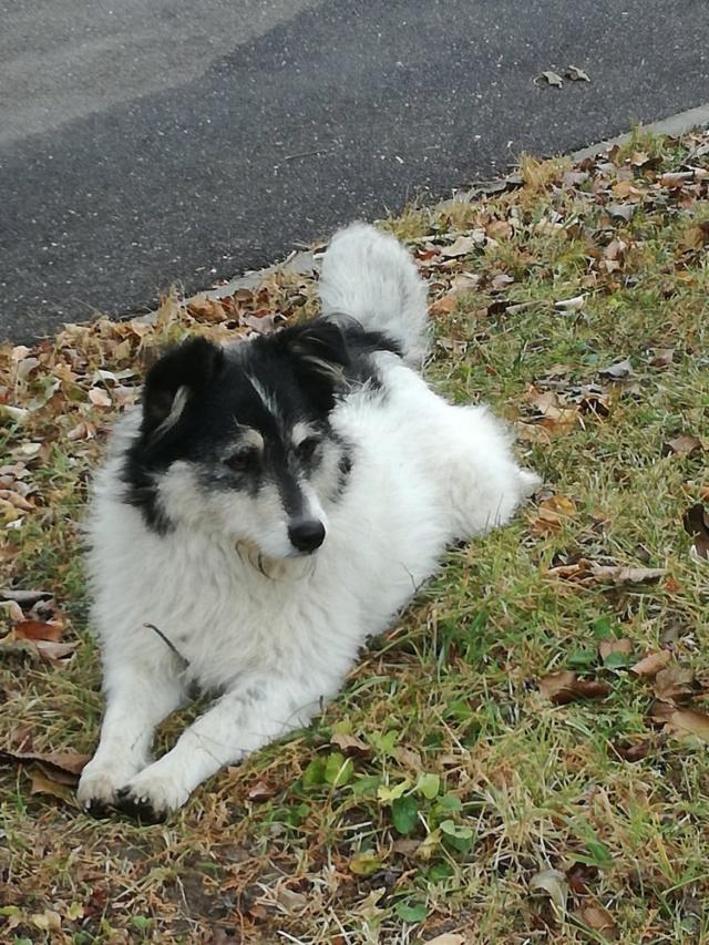LOLA - femelle croisée taille moyenne, née env 2016 - REMEMBER ME LAND - décédée Lola111
