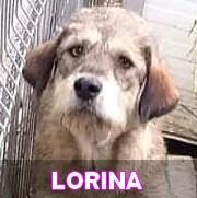 Les adultes de taille moyenne en Roumanie en un clin d'oeil Lorina16