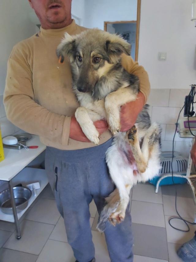 LOUPIOTE - Chiot femelle, croisée chien loup - taille moyenne à l'âge adulte - Née environ mi mars 2019 (fourrière de ROMAN) - REMEMBER ME LAND Loupio10