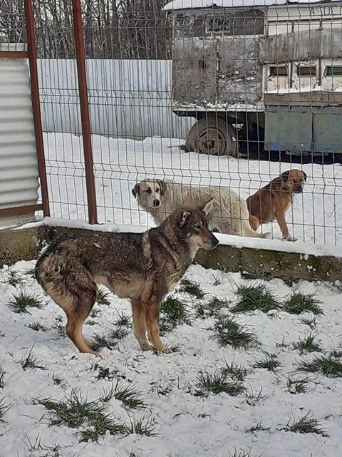 LUPI !! + de 3 ans de box !! - femelle , née environ en 2010, typée chien loup de sarloos, taille moyenne - REMEMBER ME LAND - Page 4 Lupi112