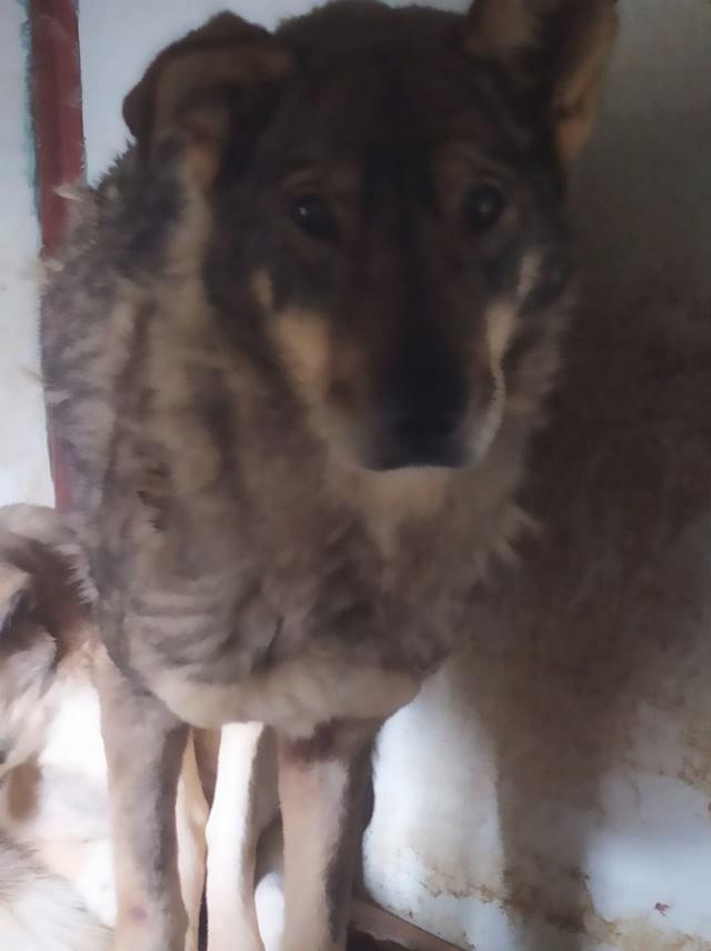 LUPI !! + de 3 ans de box !! - femelle , née environ en 2010, typée chien loup de sarloos, taille moyenne - REMEMBER ME LAND - Page 4 Lupi15