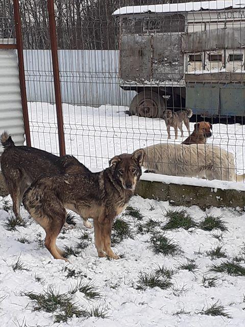 LUPI !! + de 3 ans de box !! - femelle , née environ en 2010, typée chien loup de sarloos, taille moyenne - REMEMBER ME LAND - Page 4 Lupi213
