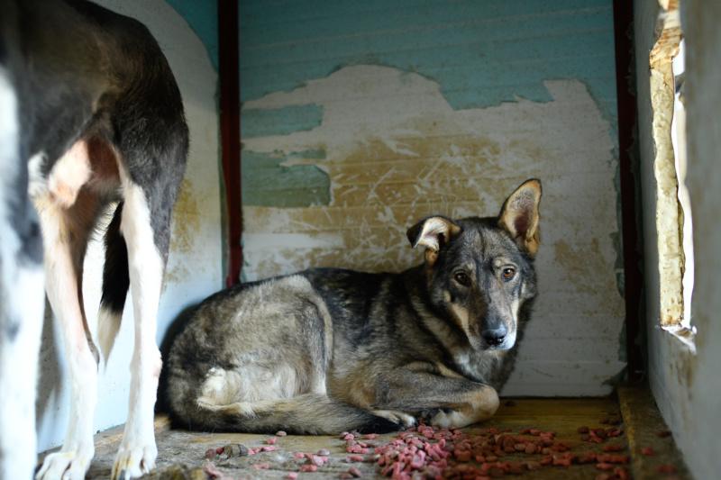 LUPI !! + de 3 ans de box !! - femelle , née environ en 2010, typée chien loup de sarloos, taille moyenne - REMEMBER ME LAND - Page 2 Lupi510