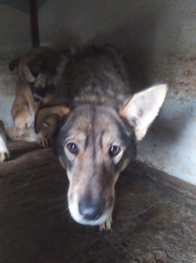 LUPI !! + de 3 ans de box !! - femelle , née environ en 2010, typée chien loup de sarloos, taille moyenne - REMEMBER ME LAND - Page 4 Lupi511