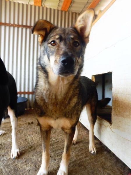 LUPI !! + de 3 ans de box !! - femelle , née environ en 2010, typée chien loup de sarloos, taille moyenne - REMEMBER ME LAND - Page 2 Lupi_310