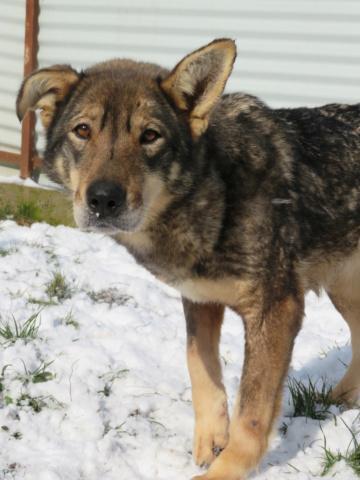 LUPI !! + de 3 ans de box !! - femelle , née environ en 2010, typée chien loup de sarloos, taille moyenne - REMEMBER ME LAND - Page 4 Lupi_313