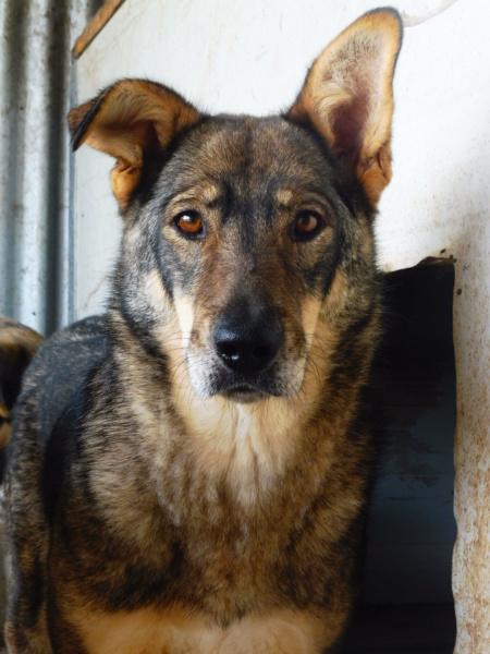 LUPI !! + de 3 ans de box !! - femelle , née environ en 2010, typée chien loup de sarloos, taille moyenne - REMEMBER ME LAND - Page 2 Lupi_510