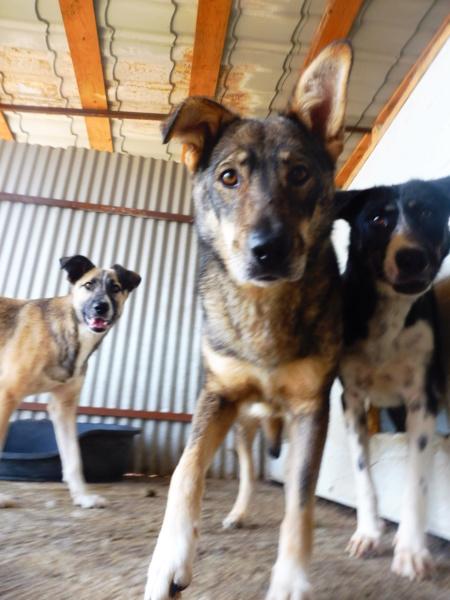 LUPI !! + de 3 ans de box !! - femelle , née environ en 2010, typée chien loup de sarloos, taille moyenne - REMEMBER ME LAND - Page 2 Lupi_710
