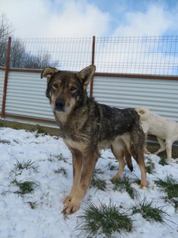 LUPI !! + de 3 ans de box !! - femelle , née environ en 2010, typée chien loup de sarloos, taille moyenne - REMEMBER ME LAND - Page 4 Lupi_712