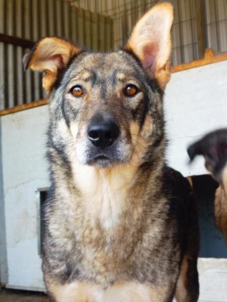 LUPI !! + de 3 ans de box !! - femelle , née environ en 2010, typée chien loup de sarloos, taille moyenne - REMEMBER ME LAND - Page 2 Lupi_910