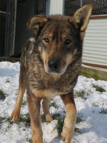LUPI !! + de 3 ans de box !! - femelle , née environ en 2010, typée chien loup de sarloos, taille moyenne - REMEMBER ME LAND - Page 4 Lupi_912