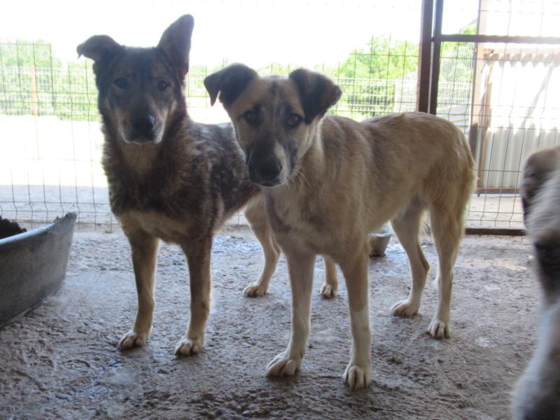 LUPI !! + de 3 ans de box !! - femelle , née environ en 2010, typée chien loup de sarloos, taille moyenne - REMEMBER ME LAND - Page 2 Lupi_p10