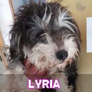 Les chiots en roumanie en un clin d'oeil  Lyria11