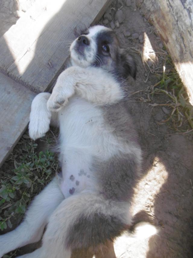 LYSANDRO - chiot mâle, de petite taille adulte, né environ fin avril 2019 - REMEMBER ME LAND - adopté par Sylvie (59) Lysand79