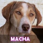 Les chiots en roumanie en un clin d'oeil  Macha16