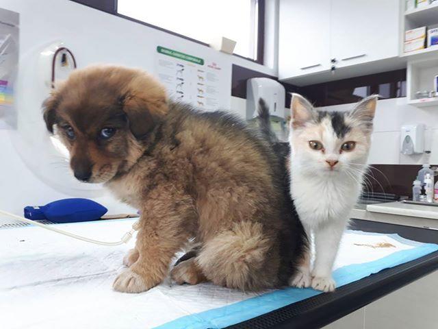 MAELYA - chaton femelle, née environ septembre 2018 - Adoptée par Véronique (78) Maelia10