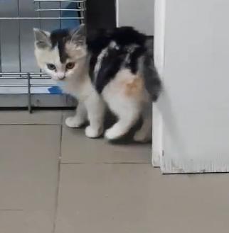MAELYA - chaton femelle, née environ septembre 2018 - Adoptée par Véronique (78) Maelya10