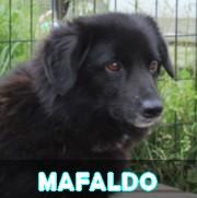Association Remember Me France : sauver et adopter un chien roumain Mafald10