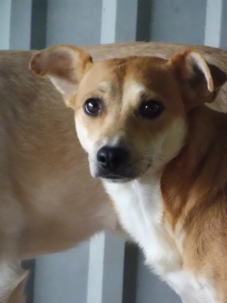 MAIKA - chienne croisée de taille moyenne, née 2015 - (Pascani) REMEMBER ME LAND - Page 2 Maika10