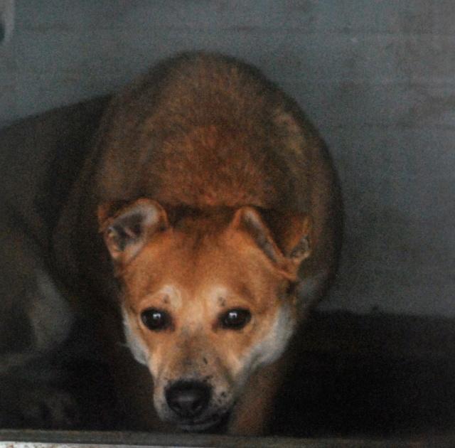 MAIKA - chienne croisée de taille moyenne, née 2015 - (Pascani) REMEMBER ME LAND - Page 2 Maika11