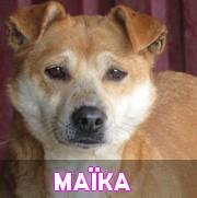 Association Remember Me France : sauver et adopter un chien roumain Maika13