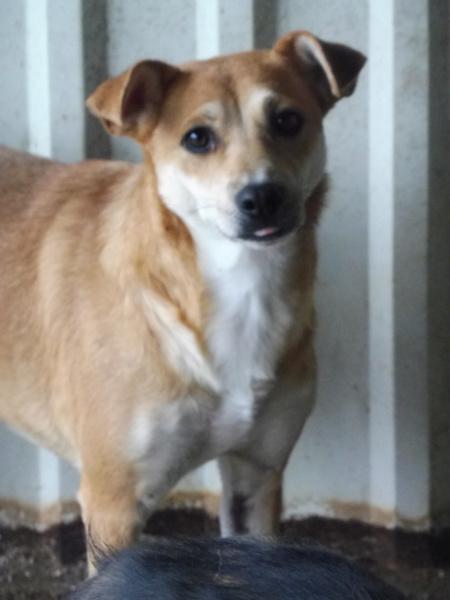 MAIKA - chienne croisée de taille moyenne, née 2015 - (Pascani) REMEMBER ME LAND - Page 2 Maika210