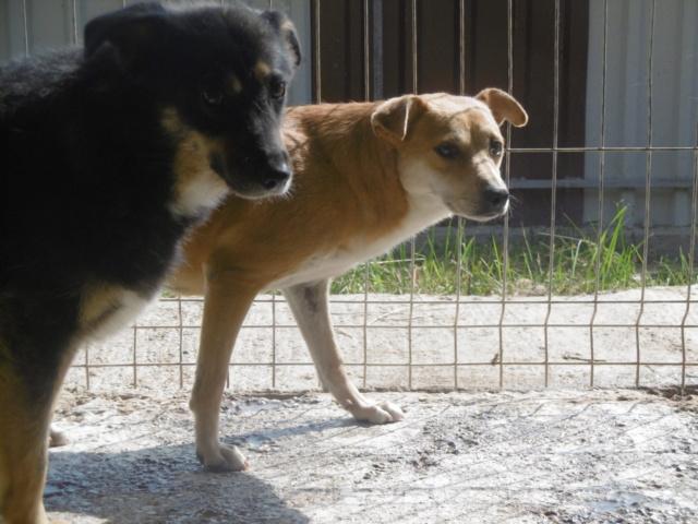 MAIKA - chienne croisée de taille moyenne, née 2015 - (Pascani) REMEMBER ME LAND - Page 2 Maika_10