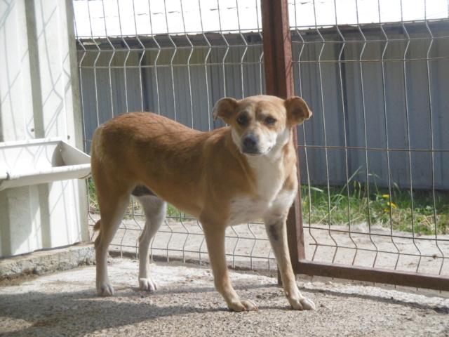 MAIKA - chienne croisée de taille moyenne, née 2015 - (Pascani) REMEMBER ME LAND - Page 2 Maika_12